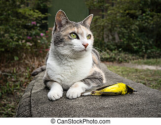 Calico Cat with Dead Bird - Calico Cat with its unfortunate...