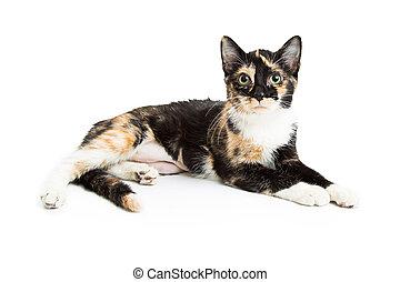 Calico Kitten Lying Over White