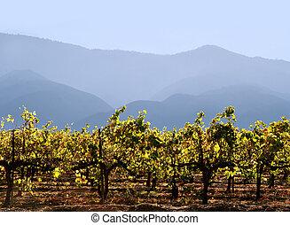 califórnia, winery