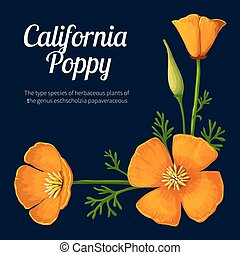californië, vector, poppy., illustratie