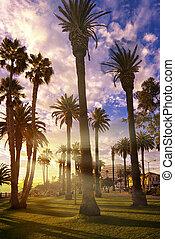 california 日の入