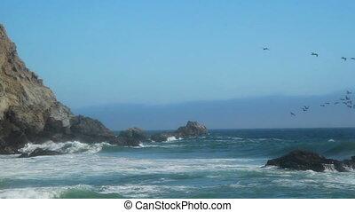 California beach birds
