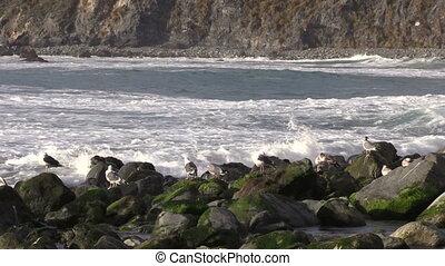 California Coastal Waves - waves crashing ashore along the...