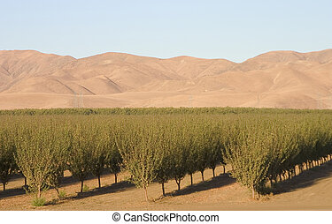 A California farm spreads out below some foothills of the central valley.
