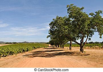California Grape Vineyard in the United States