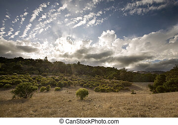 California Grassland at Sunset - Central California...