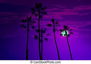 California high palm trees sunset sky silohuette