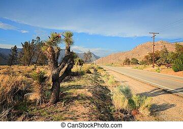 California landscape with joshua trees. Kern County road.