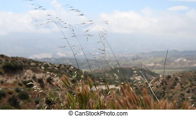 california lanscape with blade of grass in foreground