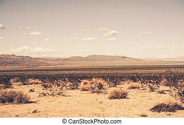 california meridionale, deserto