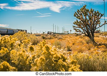 California Mojave Desert. Joshua Trees Region. United States...