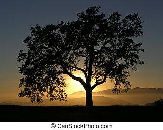 California Oak Sunse - Oak tree against sunset on mountain