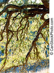 California Oak Tree Hosting Moss