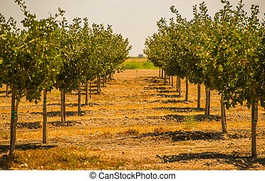 California Orchards - California Organic Orchards. Orchard...