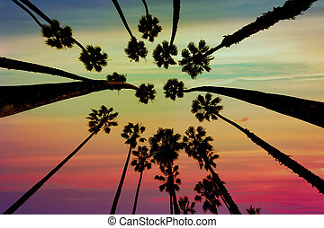 California Palm trees view from below in Santa Barbara