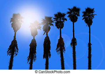 california palm trees washingtonia western surf flavour
