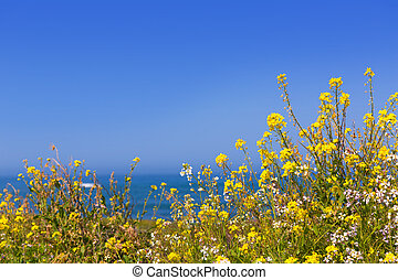 California Pigeon point spring flowers in Cabrillo Hwy...