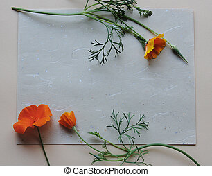 california poppies on textured paper