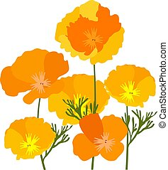 California Poppies - vector California poppies