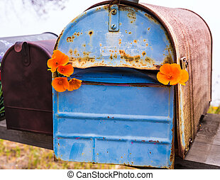 California poppy grunge mailboxes along Pacific Highway ...