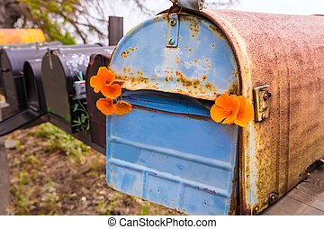 California poppy grunge mailboxes along Pacific Highway Route 1