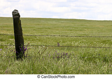 California Ranchland - Green field with bird on fence in ...