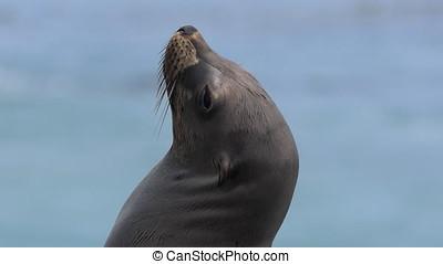 California Sea Lion Enjoying the Sun - California Sea Lion...