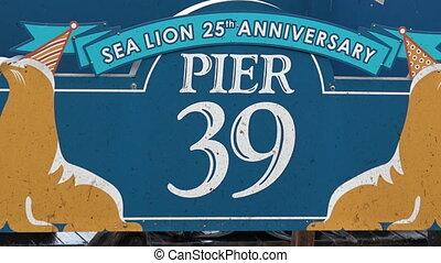 California Sea Lions at Pier 39