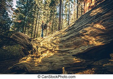 California Sierra Exploration