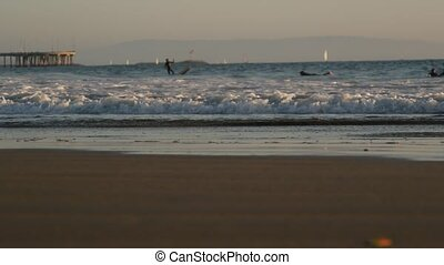 California summertime beach aesthetic, sea gull and pacific ocean water waves. Dreamlike tranquil natural background. Atmospheric seascape and seabird. United states summer coast, selective focus.