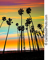 California sunset Palm tree rows in Santa Barbara