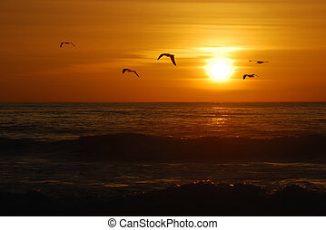California sunset - Seagulls flying over the Pacific coast ...