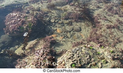 California Tide Pool - California tide pool.