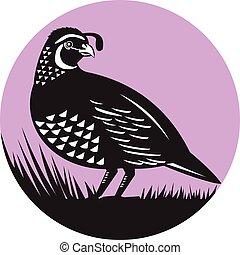 California Valley Quail Bird Circle Retro - Illustration of...