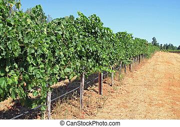California Vineyard - Beautiful vineyard in Napa Valley,...