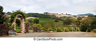 California vineyard - View at at Sonoma valley with rows of...
