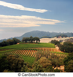 California vineyard - View at at California hills with rows...