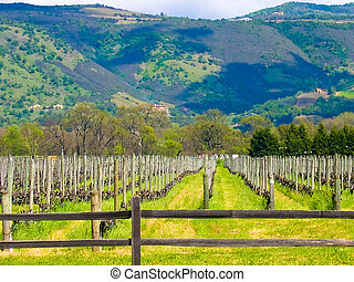 California vineyard - Vineyard in Sonoma California