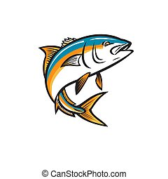 Retro style illustration of a California yellowtail, amberjack, forktail, mossback, yellowtail tunis or Seriola dorsalis, a  ray-finned fish of family Carangidae, jumping up on isolated background.