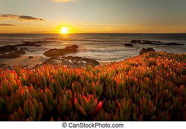 californie, dramatique, coucher soleil