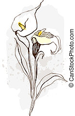 Calla. Floral illustration of blooming flowers - Beautiful...