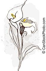 calla., floral, ilustração, de, florescer, flores