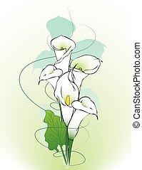 calla, flores, fundo