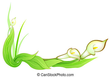 calla flower - drawing of beautiful calla flower with green...