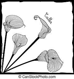 calla illustration - Sketch of calla lilies flowers. Element...