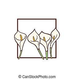 calla lilie, weißes, flowers., vektor, karte, template.