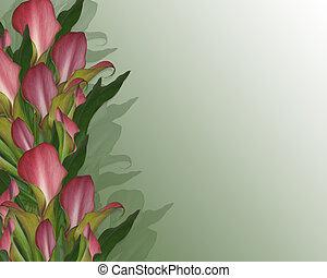 calla lilien, hintergrund, oder, umrandungen
