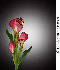 calla lilien, und, vlinders