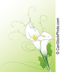 Calla lilies background - Calla flowers illustration...