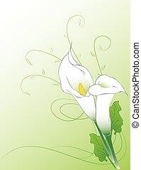 Calla lilies background - Calla flowers illustration...